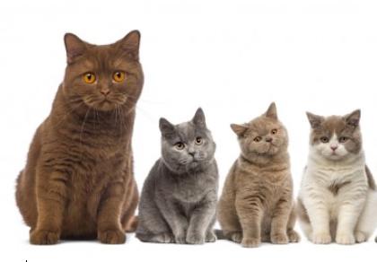 고양이 전용 자동화장실이 있다?
