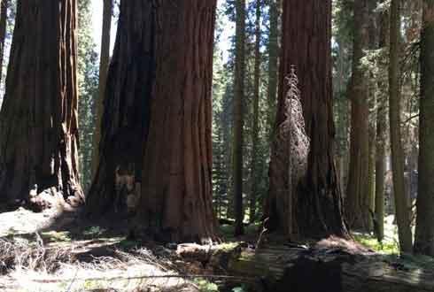 [이현경 기자의 온도차 ②] 캘리포니아 국립공원 산불, 火는 火로 잡아라?