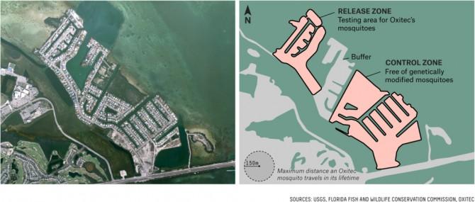 케이해이븐 섬은 크게 세 부분으로 나뉘어져 있다. 연구팀은 왼쪽부터 실험지역, 완충지역, 대조군 지역으로 나누어 실험을 진행할 계획이다. - USGS, OXITEC 제공