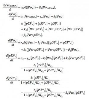 연구진이 계산에 활용한 수학 모델의 일부. - KAIST 제공