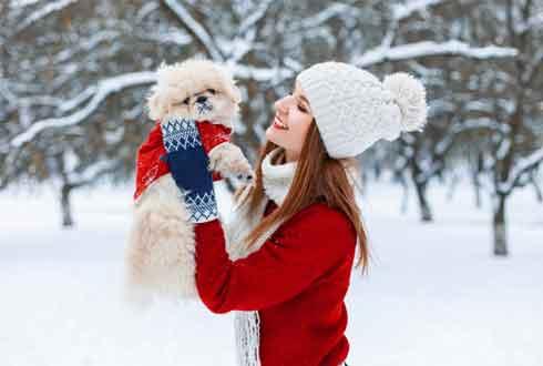 사람만 춥나? 강아지도 춥다! 반려동물 겨울 준비 TIP!