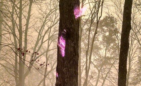 산불 현장, 속에서 불타는 나무 '포착'