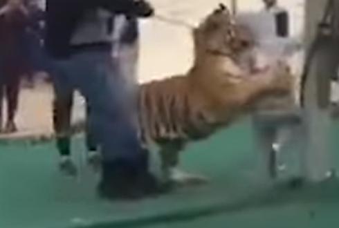 호랑이가 어린 소녀 공격해 '충격'