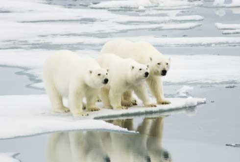 사나운 맹수 북극곰, 그런데 왜 귀여워 보일까