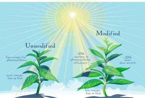 기후변화 막을 새로운 신무기 'GMO 식물'이 뜬다
