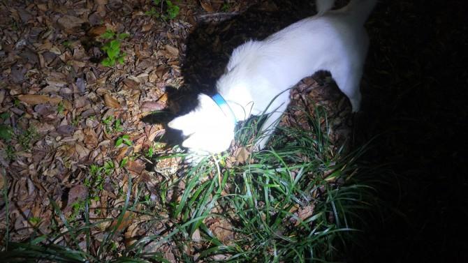 산책 중 두꺼비를 만난 개님. 산책 중이 아니었다면 개님은 두꺼비를 만날 일이 있었을까요?  - 오가희 기자 solea@donga.com 제공