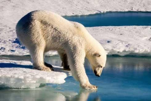 무한도전 북극곰은 무사히 북극해로 돌아갈 수 있을까