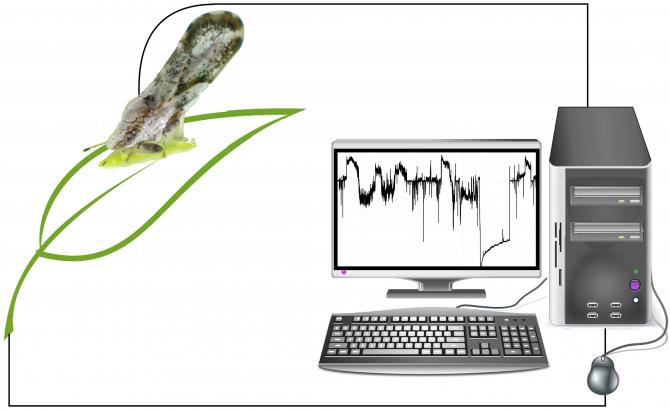 먹이 공급에 따른 곤충의 먹이 습득 과정 관찰 - PLOS Computational Biology 제공