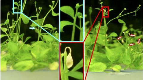 식물이 숨쉬는 과학적 원리 찾았다