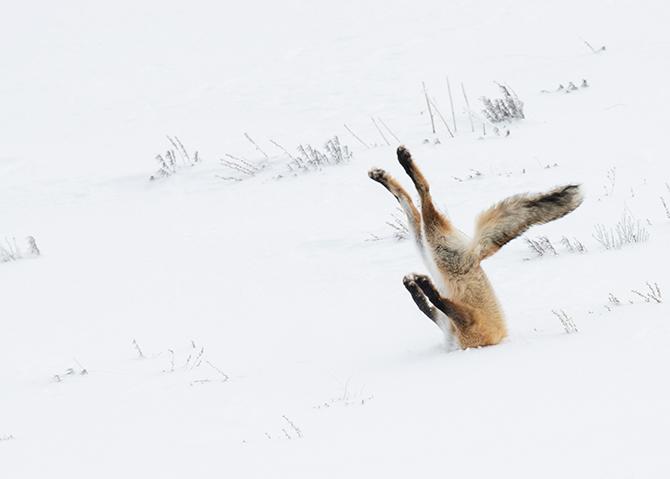 Angela Bohlke/Comedy Wildlife Photo 2016 제공