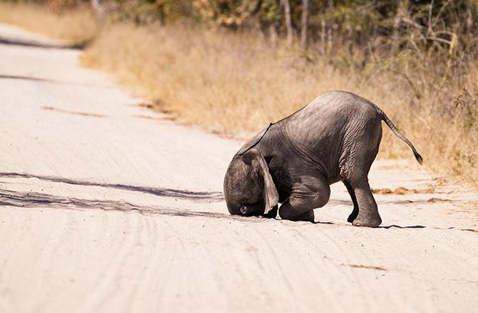 Markus Pavlowsky/Comedy Wildlife Photo 2016 제공