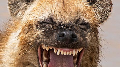 [코미디 야생동물 사진전] 환하게 웃고 있는 동물들