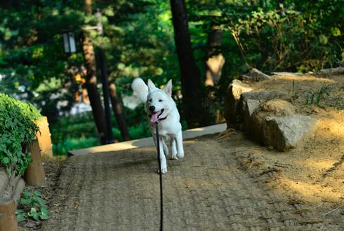 [개소리 칼럼 ] (8) 초보 견주가 알아야할 강아지 산책 상식