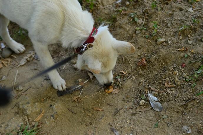 사람한테는 고약한 은행 냄새도 개에게는 흥미로운 냄새일 뿐.  - 오가희 기자 solea@donga.com 제공