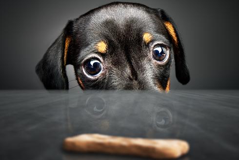 [개소리 칼럼] (9) 강아지 훈련 어떻게 해야 하나요?