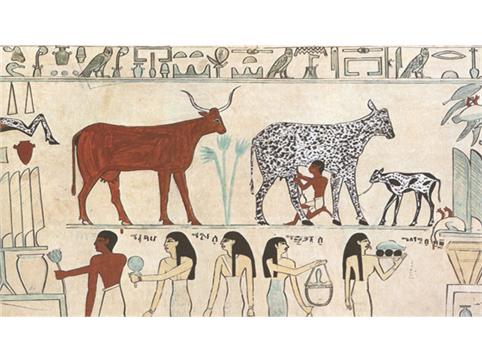 소를 사육하는 고대 이집트의 파피루스 그림. 인간이 수많은 전염병에 시달리게 된 것은, 불과 10,000년에 지나지 않는다. 농경과 목축을 통해 식량 생산량을 늘릴 수 있었다. 이를 통해 인구가 증가하고 도시와 국가가 형성되며 문명 사회를 건설할 수 있었지만, 한편으로는 다양한 종류의 병원체에 노출되게 되었다. - EBS, 오마이미래 제공