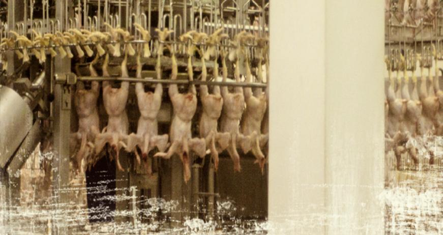 공장식 사육은 육류 생산량을 극대화 시켰다. 하지만 가축에 대한 비인도적인 밀집 사육은 가축 전염병의 창궐 및 신종 전염병의 출현 등 보다 큰 문제를 야기했다.