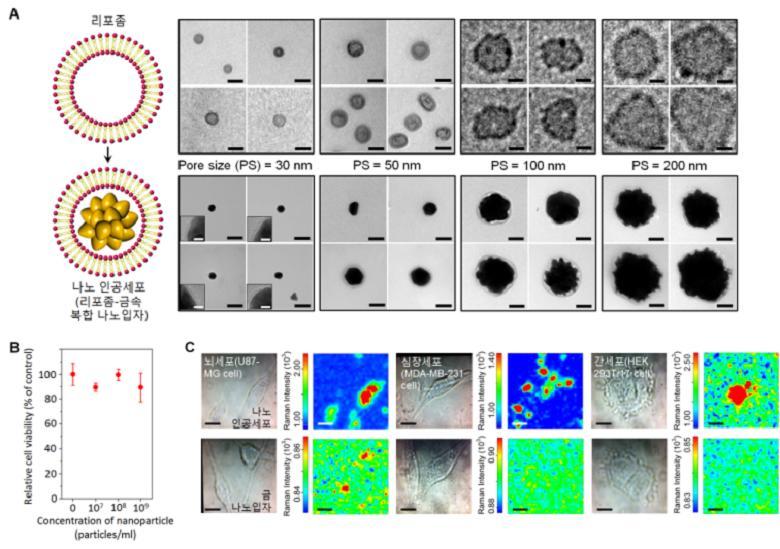 서강대 연구진이 개발한 나노인공세포의 물리적 특성 및 생체독성 분석을 나타낸 모습 - 서강대 제공