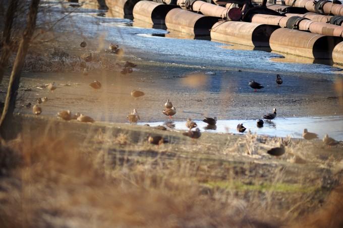 야생에서 사는 새에게 조류독감은 사람에게 일반 감기와 같은 격이다. - GIB 제공