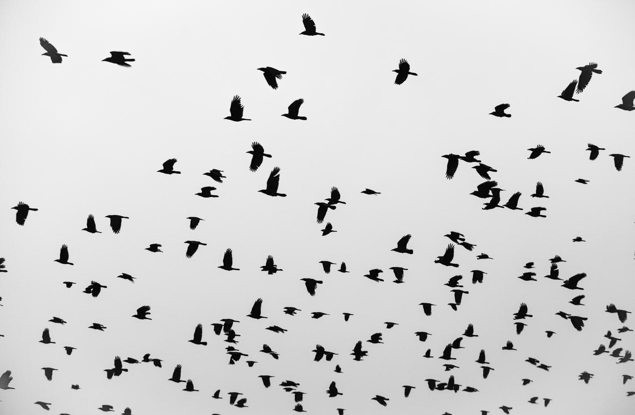 겨울철 철새가 항공기와 충돌하면 큰 사고가 날 수 있어 이에 대비한다