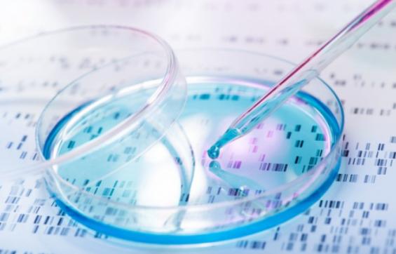 현미경으로 관찰가능한 거대(?) 인공세포막 개발