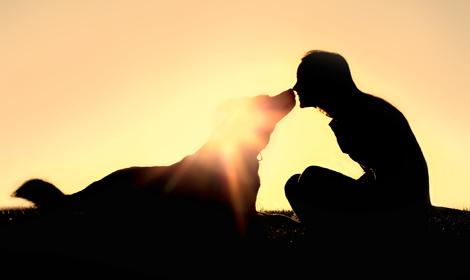 개를 키우지 않으면 알 수 없는 '절대 기쁨' 몇 가지!