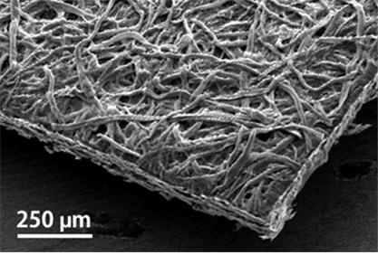 종이 통풍 검사지의 주사전자현미경 사진 - KAIST 제공