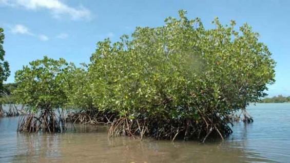 바닷물을 담수로...식물 뿌리에서 길 찾았다
