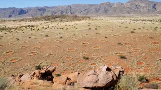 [표지로 읽는 과학]나미브 사막의 미스테리 '요정의 원', 왜 생기는 걸까?