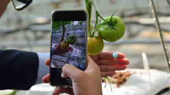 스마트폰으로 사진만 찍어도…인공지능이 토마토 크기 측정한다