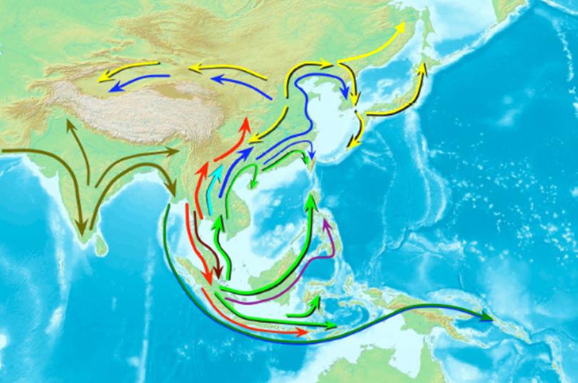 동아시아인은 농경생활이 본격화된 약 1만 년 전부터 남중국을 중심으로 남방계 아시아인이 지금의 한국, 일본, 러시아 등의 지역으로 퍼져나가며 인구가 확산된 것으로 추정된다. 게놈(유전체) 분석 결과, 실제로 현대 한국인의 유전적 구성은 남방계 아시아인에 가까운 것으로 나타났다. - 사이언스 제공