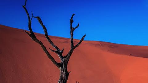 나미비아 사막의 나무, 그림일까 사진일까