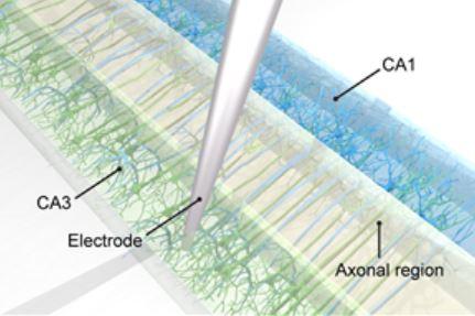 한국과학기술연구원(KIST) 연구진이 개발한 방식으로 뇌신경세포(뉴런)를 정렬해 배양시킨 모습. 특정한 방향으로 뉴런이 정렬돼야 신호가 전달되는 인공 뇌신경망의 기능을 갖췄다. - 한국과학기술연구원 제공