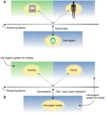 앨런 튜링이 1950년 제안한 이미테이션게임(튜링테스트)는 기계(인공지능)가 스크린을 통해 사람(검사자)가대화를 나눈 뒤 상대가 사람이라고 판단할 경우  기계도 생각을 한다고 볼 수 있다는 설정이다(위). 2005년 컴퓨터과학자 다비드 하렐은 인공세포(chell)가 세포(검사자)와 소통을 한 뒤 상대가 세포라고 판단할 경우 인공세포도 생명이 있다고 볼 수 있다고 제안했다(아래). 최근 인공세포로 세포 튜링테스트를 수행해 생명도가 39%라는 연구결과를 얻었다는 논문이 발표됐다. - 네이처 생명공학 제공