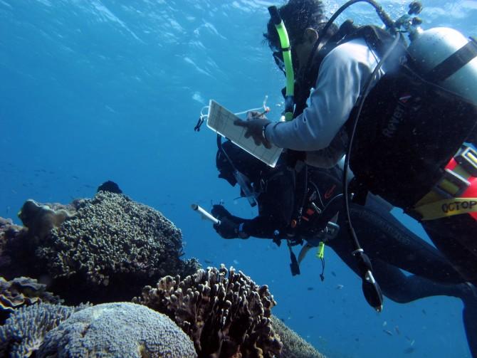 미국 코넬대 생태진화생물학과의 졸리 램 연구원과 동료 연구진이 인도네시아 스퍼몬드 일대 해초밭을 조사하는 모습. - Science 제공
