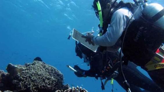[표지로 읽는 과학] 천연항생제 내뿜는 바다의 파수꾼 '해초'