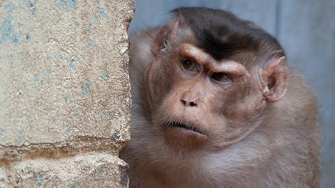 원숭이 대장은 언제 바뀔까?