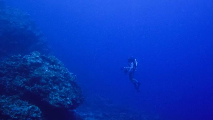 그는 수심 30m-150m 사이에 희미하게 빛이 드는 '트왈라잇 존(약광층)'에 서식하는 물고기들과 산호들을 관찰하기 시작했다.  - SCIENCE / Sonia Rowely 제공