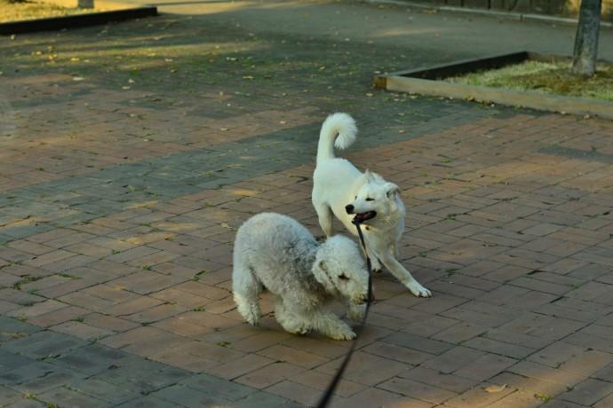 진돗개인 저희 개님에게 개 친구는 매우 소중합니다. ㅠㅠ. - 오가희 기자 solea@donga.com 제공
