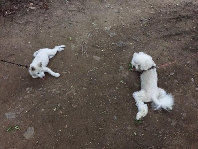 둘이 놀기 위해 서로에게 달려드는 순간 저 리드 줄은…. - 오가희 기자 solea@donga.com 제공
