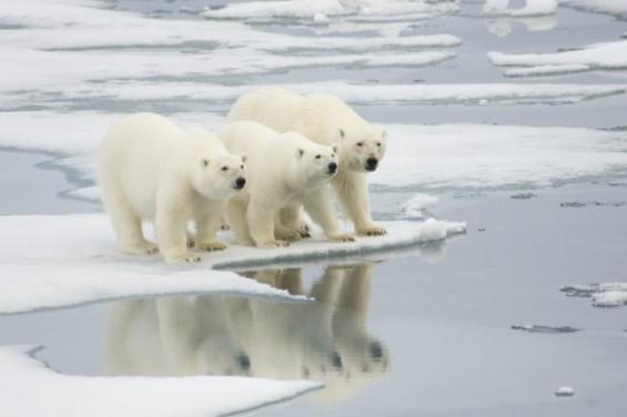 21세기 중반, 극지 빙하 모두 사라진다?