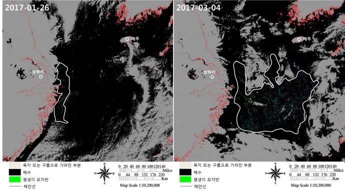 한국해양과학기술원 해양위성센터는 1월 26일 상해 인근 해역에만 분포하던 괭생이 모자반이(왼쪽) 3월 4일에는 동중국해에 전반적으로 걸쳐 넓게 분포(오른쪽) 하고 있는 모습을 관측했다.  - 해양과학기술원 제공