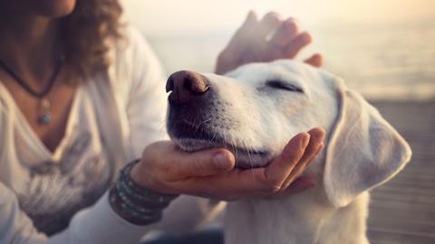 [개소리 칼럼] 개 마사지를 직접 해주면 건강에 도움이 될까요?