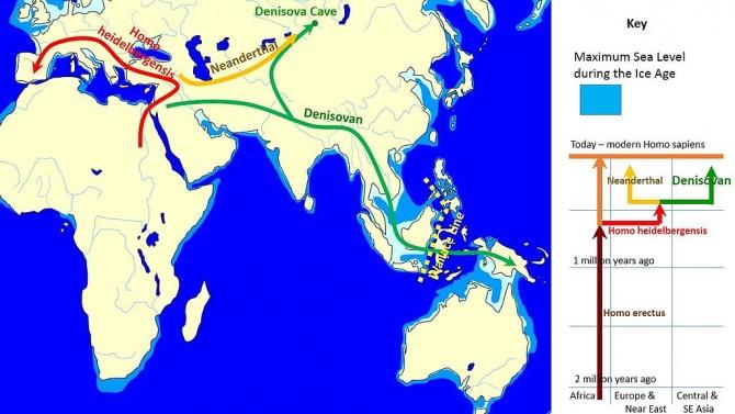 지난 2010년  DNA 게놈 해독으로 데니소바인의 실체가 확인되면서 이 고인류의 삶의 여정이 재구성됐다. 즉 호모 하이델베르겐시스에서 약 40만 년 전 네안데르탈인과 데니소바인이 갈라졌고 그 뒤 데니소바인은 동진을 해 일부는 시베리아로 일부는 동남아시아를 거쳐 오세아니아까지 갔을 것이다. 이번 두개골이 데니소바인이라면 동남아로 꺾이는 지점에서 동북쪽으로 새로운 선을 그려야 할 것이다. -  John D. Croft 제공