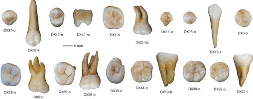 중국 남부 후난성에서 발굴된 약 10만 년 전 호모 사피엔스의 치아로 현대인의 치아와 구별이 안 될 정도다. 이 발견으로 대략 6만 년 전에 호모 사피엔스가 동아시아에 도달했다는 기존 가설이 타격을 입었다. - 네이처 제공
