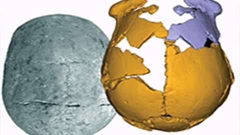 11만 년 전 동아시아에는 머리가 아주 큰 사람이 살았다