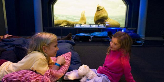 박물관 바닥에 침낭을 펼치고, 친구와 하룻밤을 잘 수 있는 프로그램이 있다. - 미국자연사박물관홈페이지 제공