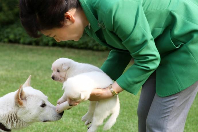 박근혜 전 대통령의 반려견, 새롬이와 희망이가 처음 낳았던 새끼들. 이 때 낳은 5마리는 공고를 통해 분양을 갔으며, 현재 새로 태어난 7마리가 청와대에 남겨졌다.  - 박근혜 전 대통령 페이스북 제공