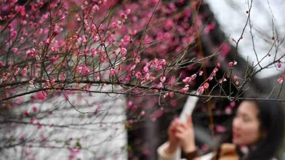 [17일 날씨] 따뜻한 봄, 봄이 왔어요…큰 일교차 주의