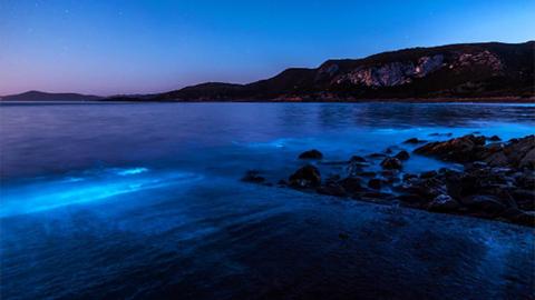 호주, 파랗게 빛나는 밤바다